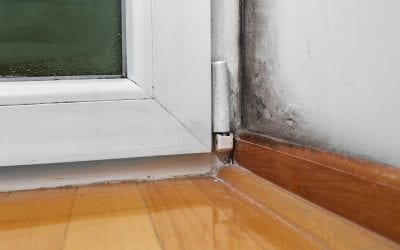 6 Signs of Mold in Your Home