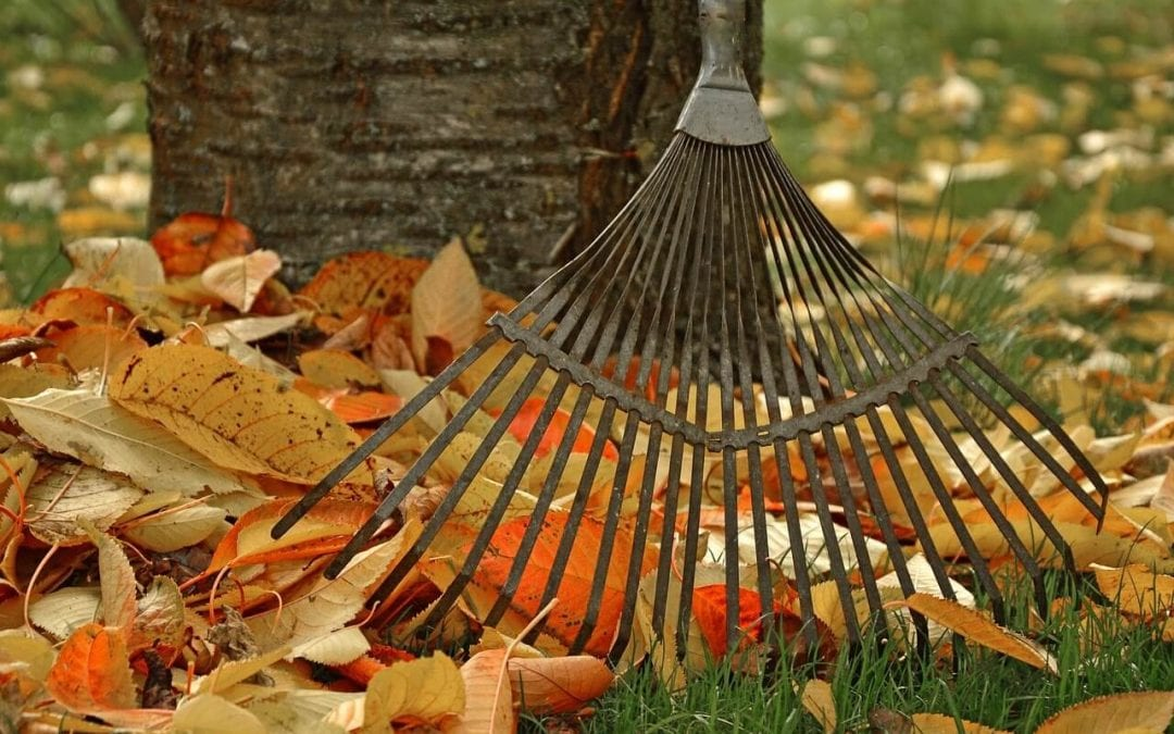 Tips to Maintain Your Landscaping in Fall